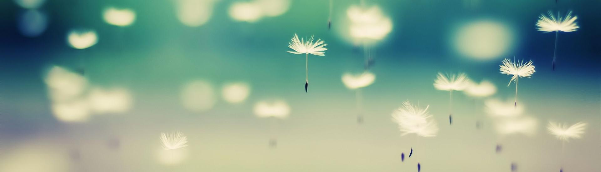 files/DMS/HU/tumblrstaticbeautiful-dandelion-wallpaper.jpg